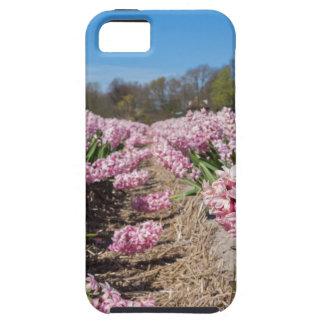 Blumenfeld mit rosa Hyazinthen in Holland Etui Fürs iPhone 5