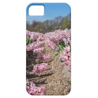 Blumenfeld mit rosa Hyazinthen in Holland Hülle Fürs iPhone 5