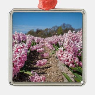 Blumenfeld mit rosa Hyazinthen in Holland Quadratisches Silberfarbenes Ornament