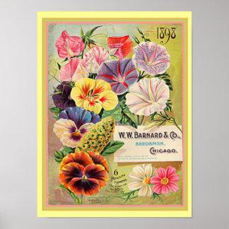 Blumenpaket-Druck 12x16 des samen-1898 Poster