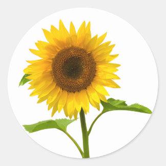 Blumensonnenblume-Gelb-Sonnenblume Runder Aufkleber