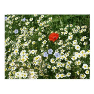 Blumenwiese Postkarte