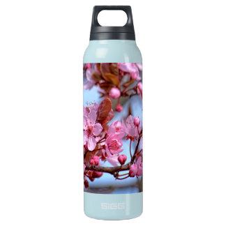 Blüte der Kirsche Isolierte Flasche