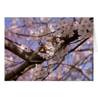 Blüten der Mutter Tages Karte