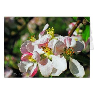 Blüten-Gruppe Karte
