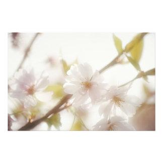 Blütenkirsche Fotodruck