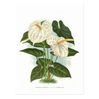 Blütenschweif Postkarte