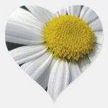 Blütenzentrum weisse Margerite Aufkleber
