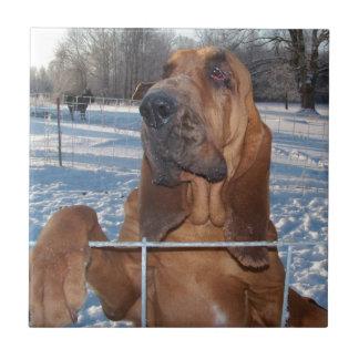 Bluthund-Gesicht Kleine Quadratische Fliese