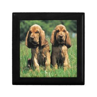 Bluthund-Welpen Geschenkbox