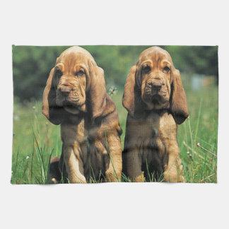 Bluthund-Welpen Geschirrtuch