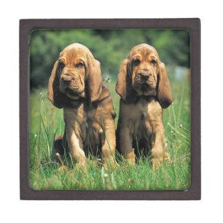 Bluthund-Welpen Schachtel