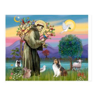 Bndr-StFrancis-Sheltie-Leah-nocat Postkarte