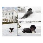 """BO """"der Obama-Familienhund"""" in der Schneepostkarte Postkarte"""