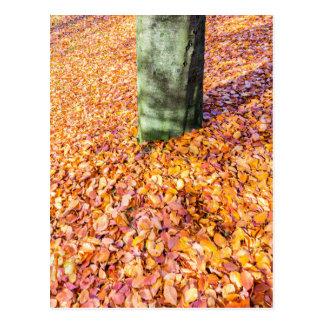 Boden um den Baumstamm, der mit Herbst bedeckt Postkarte