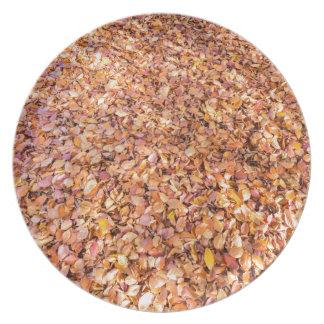 Boden umfaßt mit Buchenbaum-Blätter im Herbst Teller