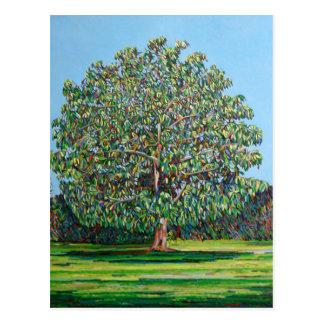 Bogen-Baum-Sommer Postkarte