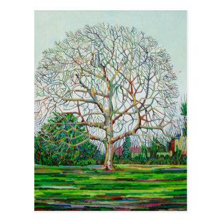 Bogen-Baum-Winter Postkarte