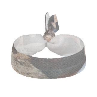 Bogen-Nationalparksüdfenster von der Rückseite Haarband