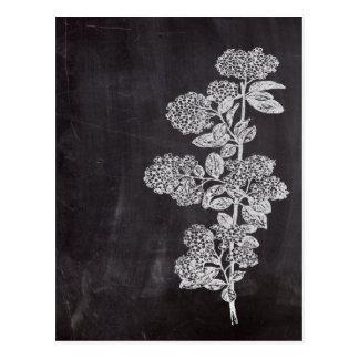Böhmische schicke französische Landtafel botanisch Postkarte