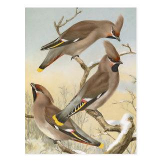 Böhmischer Waxwing-Vintage Vogel-Illustration Postkarte