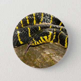 Boiga dendrophila oder Mangrovenschlange Runder Button 5,1 Cm