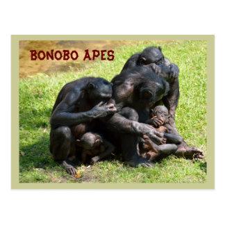 Bonobo-Affen Postkarte
