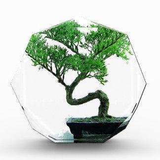 Bonsaibaum Malerei Acryl Auszeichnung