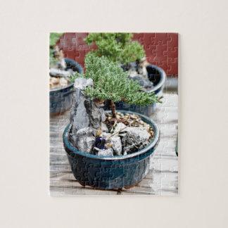 Bonsais-Baum Puzzle