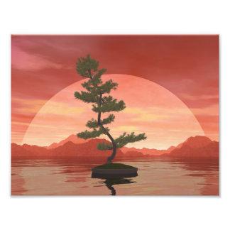 Bonsaisbaum der schottischen Kiefer - 3D Fotodruck