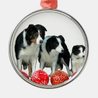 Border-Collie-Hunde mit roten Silbernes Ornament