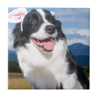 Border Collie Fliesen Border Collie Keramikfliesen Esszimmer   Weie Fliesen  Bordre