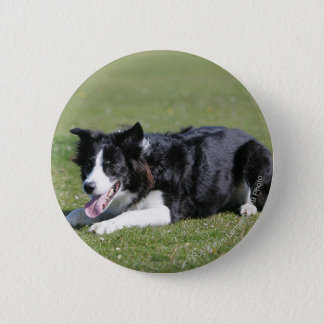 Border-Collie-Niederlegung Runder Button 5,7 Cm