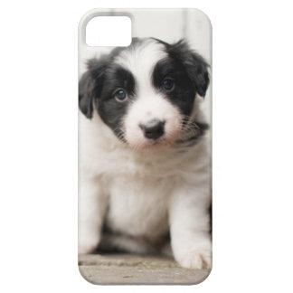 Border-Collie-Welpe iPhone 5 Etui