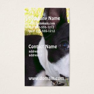 boston-terrier-1 visitenkarte
