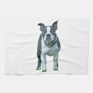 Boston-Terrier 1b Geschirrtuch