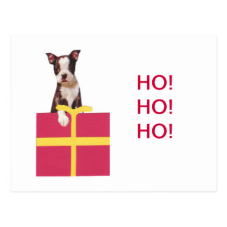Boston-Terrier-Geschenkboxen Postkarte