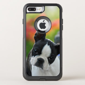 Boston-Terrier-Hundeniedliches