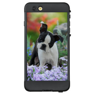 Boston-Terrier-Hundeniedliches Welpen-Foto LifeProof NÜÜD iPhone 6 Plus Hülle