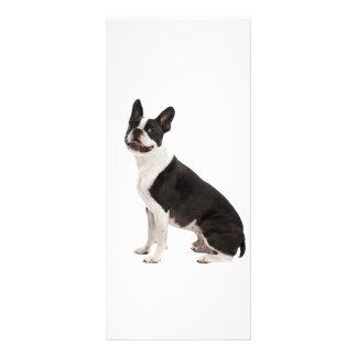 Boston-TerrierhundeFotoraum-Gestellkarte Werbekarte