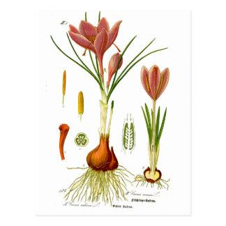 Botanik-Illustration Postkarte
