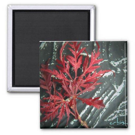 botanische Bilder für Becher, Mausunterlagen und m Magnets