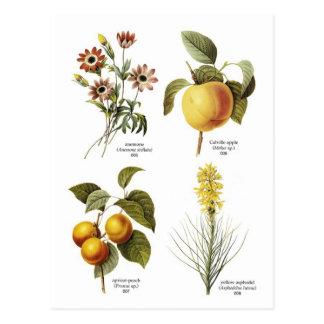 Botanische Blumenillustrationen Postkarte