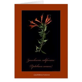Botanische Druck-Karten Kaliforniens Fuschia Karte