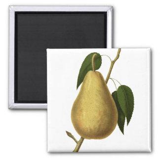 Botanische Frucht-Birne Quadratischer Magnet