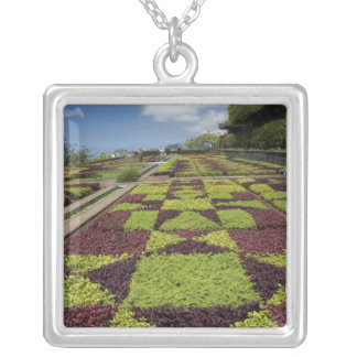 Botanische Gärten, Funchal, Madeira-Inseln, Versilberte Kette