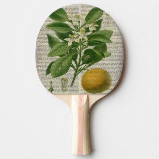 botanische Kunstorange des modernen Vintagen Tischtennis Schläger