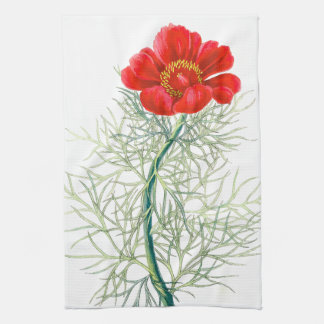 Botanische Pfingstrosen-BlumenBlumen-Küchen-Tücher Geschirrtuch