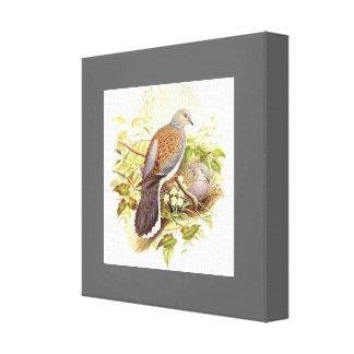 Botanische Schildkröte-Tauben-Vogel-Tier-Tiere Leinwanddruck