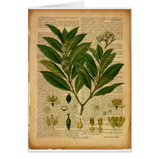 Botanischer Druck auf Seite des alten Buches Karte